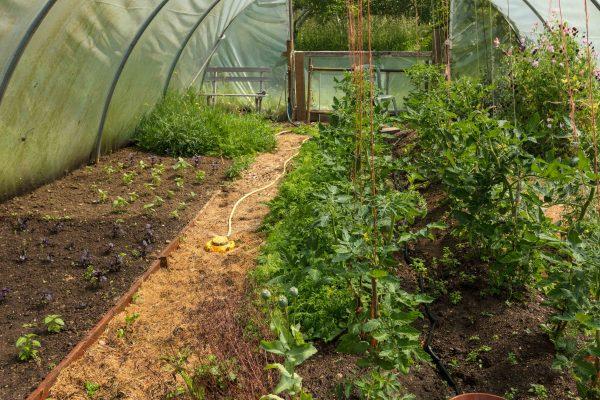 Les Hendry Garden Food1