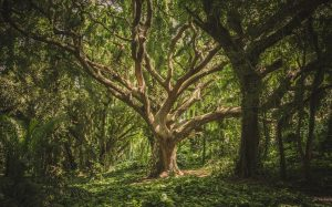 Restoring Eden - Spiritual Ecology at Hawkwood