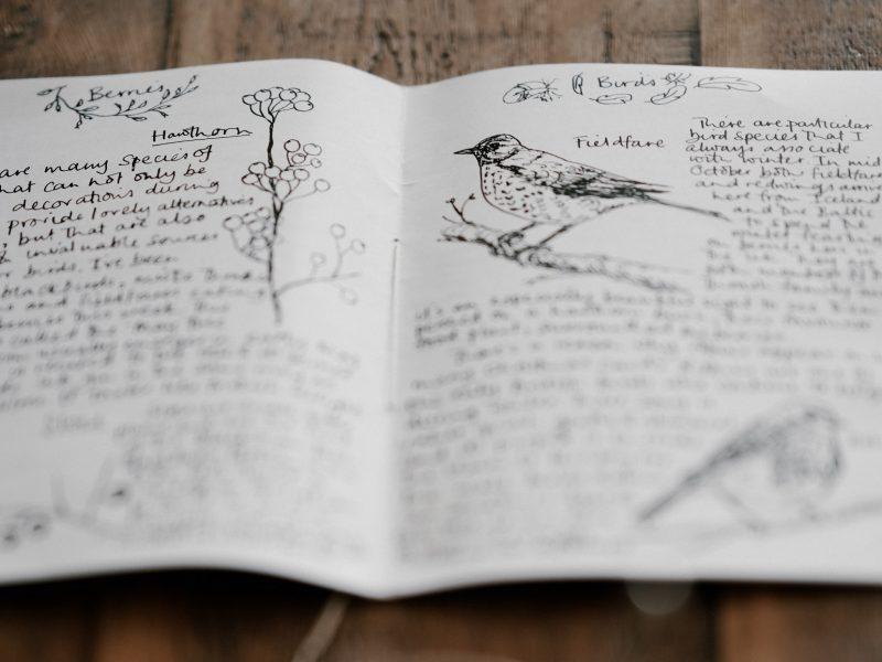 wild scribe nature journaling