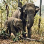 Elephants - Gardeners of the Forest