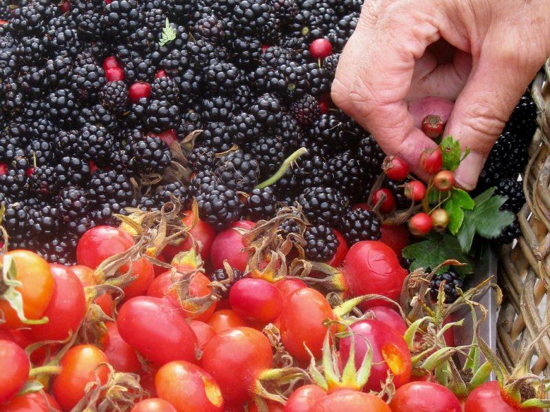 Abundant Harvest Daphne Lambert