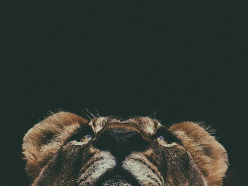 Animal Communication Telepathy