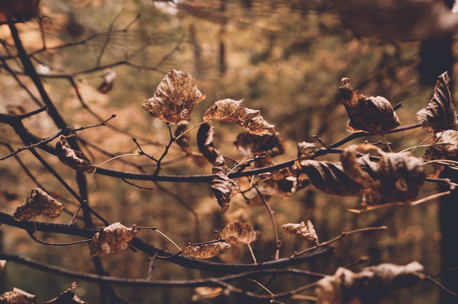 stephen moss nature writing