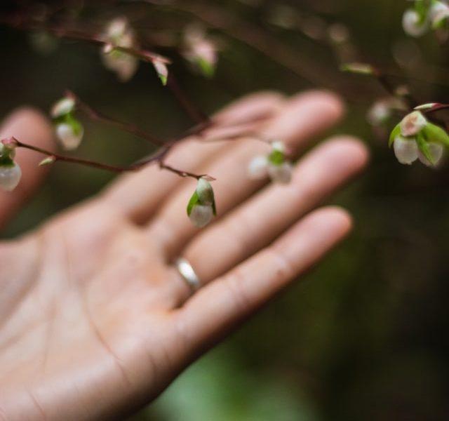 Writing Wild Spring