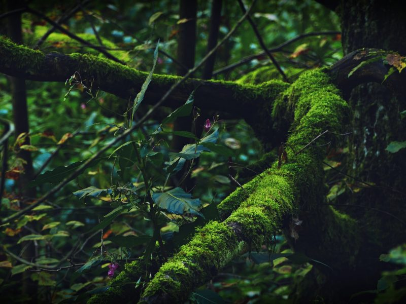 Awakening the Sage Within - Felice Rhiannon - 21-X451
